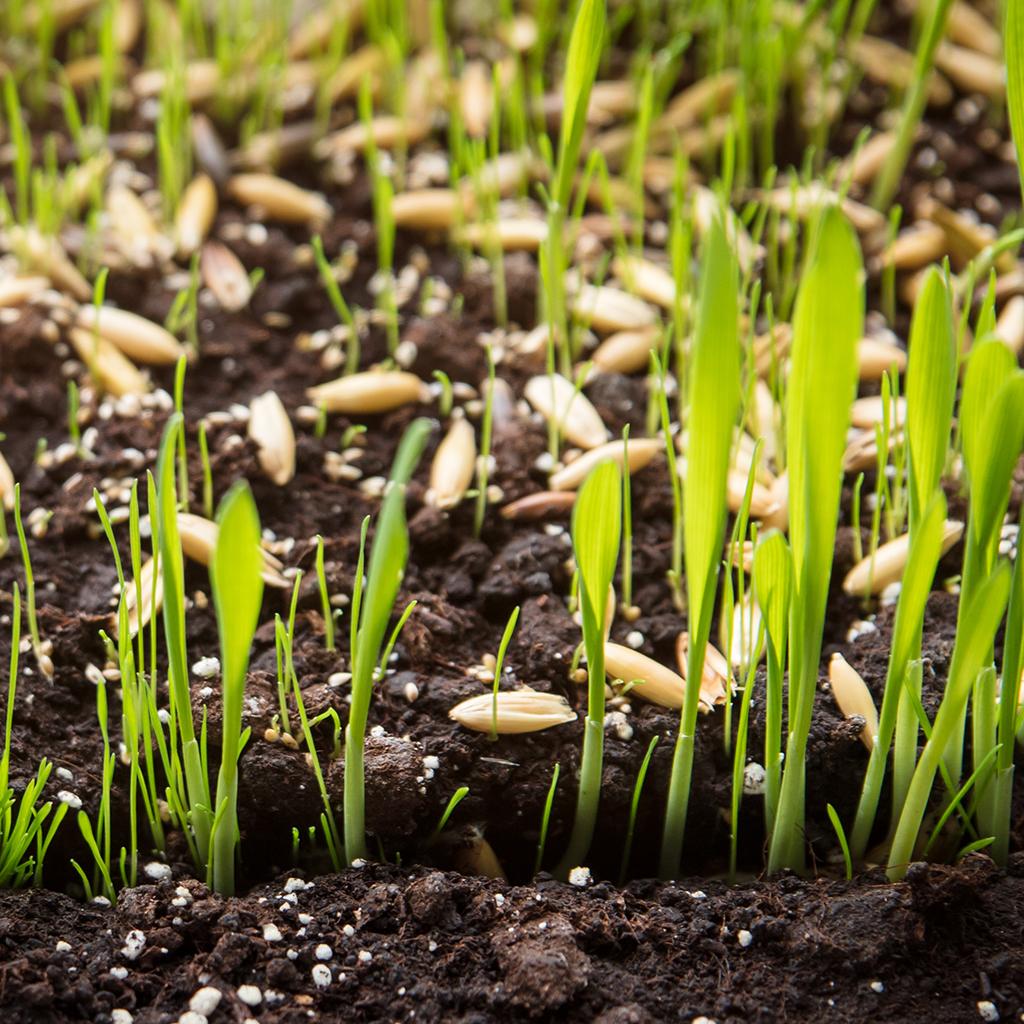 Für die Rasenpflege im Frühjahr benötigt man andere Nährstoffe als im Herbst